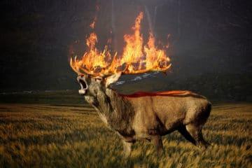 comment survivre a un feu de foret