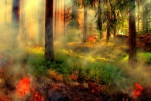 foret en feu