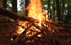 incendie foret